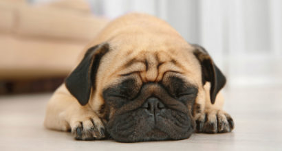 Pet Odor and Allergen Removal